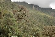 Cloud forest and Cerro Tapichalaca;  Tapichalaca Reserve; Ecuador, Zamora Chinchipe