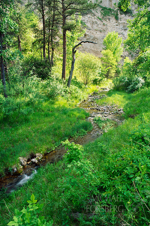 The middle branch of Soldier Creek runs through a woodland in Nebraska's Pine Ridge.  Sioux County, Nebraska.