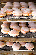 Berliners-a classic German treat, like a jelly donut-await lines of customers at Guglhupf Bakery in Durham, NC.