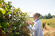 Julie Schedeen of Sheedens Farm in Boring, Oregon specializes in wide variety of berries.