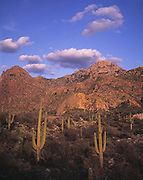 Catalina State Park, with Saguaro cactus and Santa Catalina Mountains with sunset glow on Samaniego Ridge (darker area at left) and Romero Pass (canyon at right), near Tucson, Arizona...Media Usage:.Subject photograph(s) are copyrighted Edward McCain. All rights are reserved except those specifically granted by McCain Photography in writing...McCain Photography.211 S 4th Avenue.Tucson, AZ 85701-2103.(520) 623-1998.mobile: (520) 990-0999.fax: (520) 623-1190.http://www.mccainphoto.com.edward@mccainphoto.com.