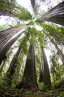Jedediah Smith Redwoods State Park, California.