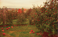 New York, Apple Orchard in theHydsin River Valley, near town of Hudson, Catskill Mountains in background