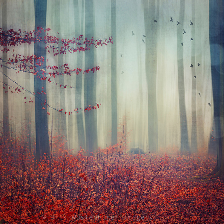 Forest on a rainy and wet and misty snowless winter day - manipulated photograph