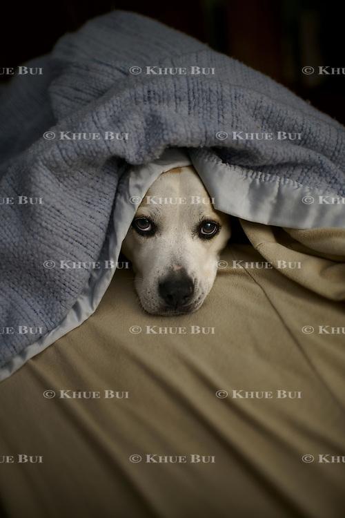 Izzie sleeps under her blanket December 28, 2017, in Richmond, VA.<br /> <br /> Photo by Khue Bui