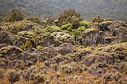 Native Flora, Stewart Island, New Zealand