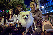 Young ladies with a dog at the Hongdae quater. Hongdae area is an entertainment area and clubbing district in northwest Seoul, South Korea - close to the Hongik University.