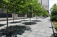 Newly Planted trees at World Trade Center in Battery Park City.