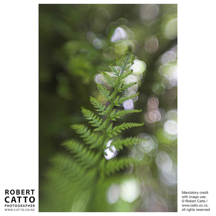 A variety of New Zealand's fern life, captured with a Lensbaby at Karori Wildlife Sanctuary, Wellington New Zealand.
