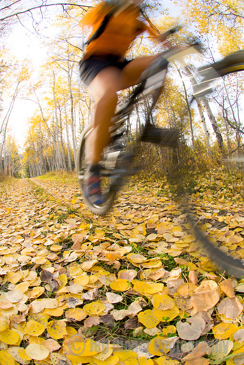 A young woman rides a mountain bike through an Aspen Grove in Jackson Hole, Wyoming (blurred motion).