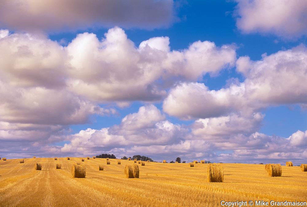 Bales and cumulus clouds. Shellbrooke, Saskatchewan. Canada