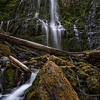 Proxy Falls is a waterfall located in the Willamette National Forest in Oregon.  One stream cascades into two separate shimmering veils falling 226 feet.