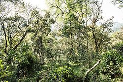 Coffee plantations outside of Bonga in Kaffa, Ethiopia.