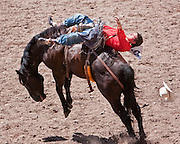 Bareback bronc rider, Caleb Bennett, shows perfect form at the 2009 Cheyenne Frontier Days.