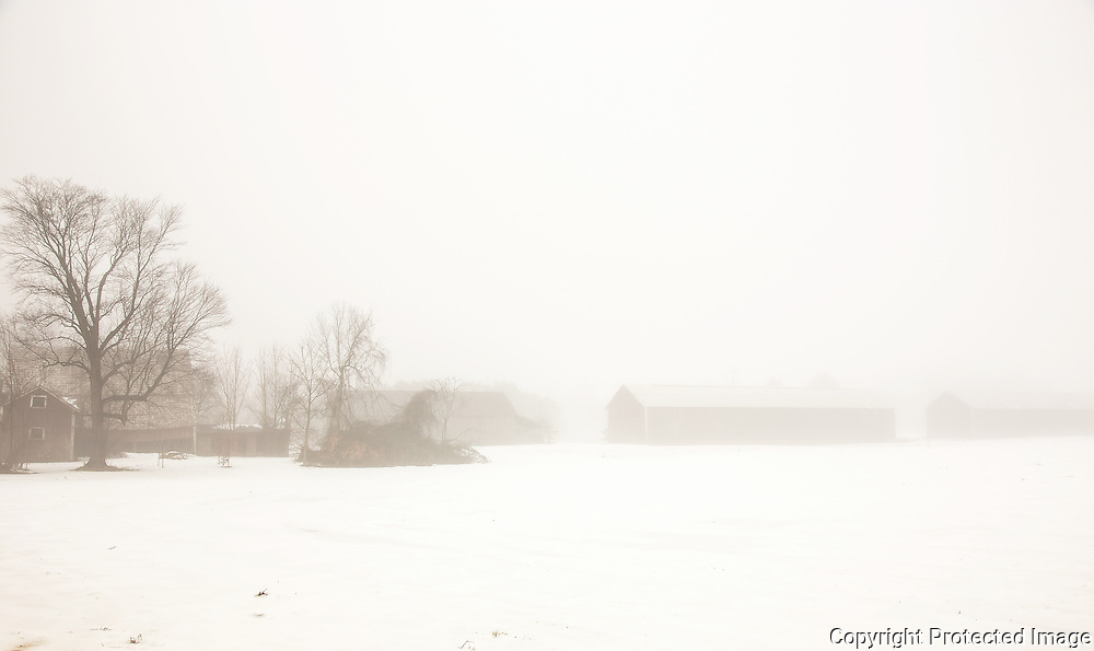 A cold and foggy winter day in western Massachusetts will yield any number of views of wonderful tobacco barns like these.