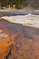 Red colored algae and bacteria in the small streams that flow from several geyers into firehole Lake at Lower Geyser Basin. Yellowstone National Park, Wyoming, USA.