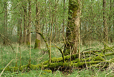 Voorsterbos, Natuurmonumenten, Kraggenburg, Noordoostpolder, Flevoland