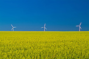 wind turbines and canola crop<br /> Somerset <br /> Manitoba<br /> Canada