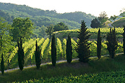 Italy, Collio. Wine.