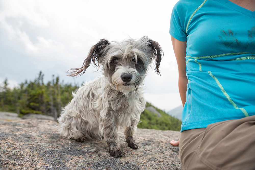 Small dog on the Summit of Grace peak