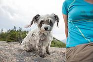 Small dog on the Summit of Grace peak