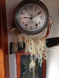 Epiphytes on Clock inside SV Maple Leaf Wheelhouse, Gulf Islands, British Columbia, Canada