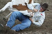 061408-Evergreen, CO-steerwrestling-Ryan Hinton digs in and pulls a steer calf to the ground during the steer wrestling competition Saturday, June 14, 2008 at the Evergreen Rodeo Grounds..Photo By Matthew Jonas/Evergreen Newspapers/Photo Editor