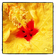 Nectar<br />