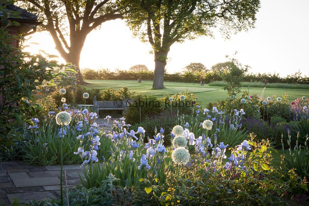 Iris germanica 'Jane Phillips' and Allium 'Mount Everest', Manor Farm, Cheshire