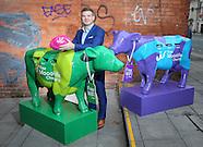 Gordon D'Arcy Eir Cows