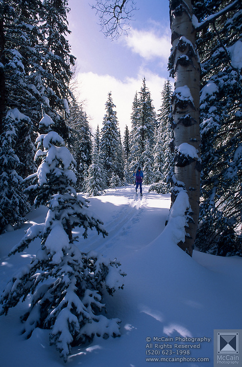 Cross-country skier on backcountry trail, No. Rim Nordic Ctr., Grand Canyon National Park, Arizona