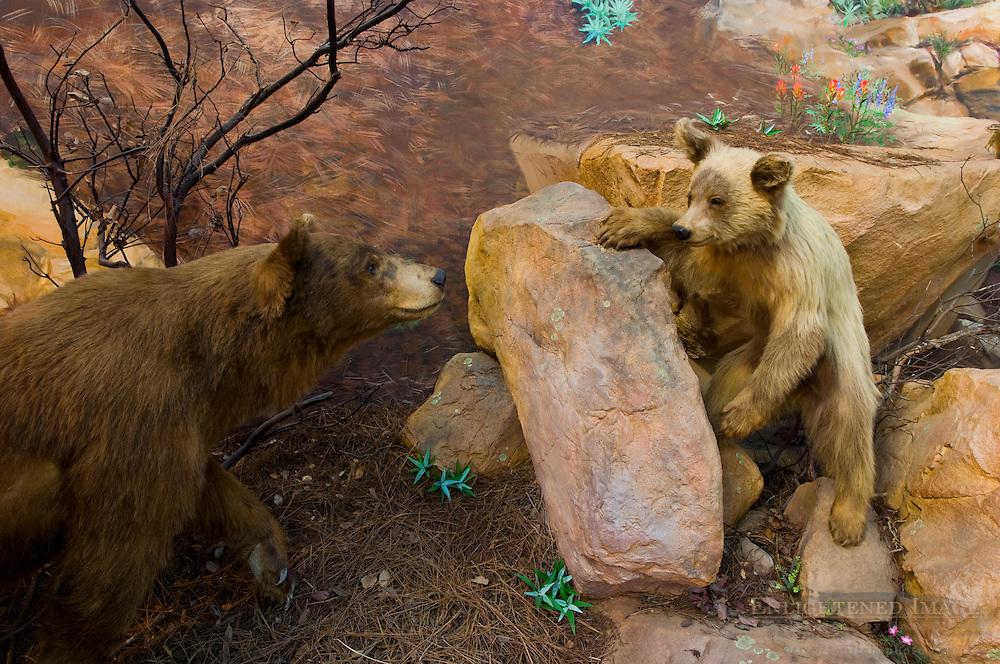 Natural history exhibit at the Ojai Valley Museum, Ojai, California