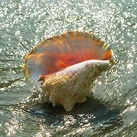 Sea Shells and Sealife