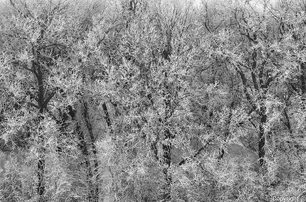 Trees in forest covered with hoarfrost<br />