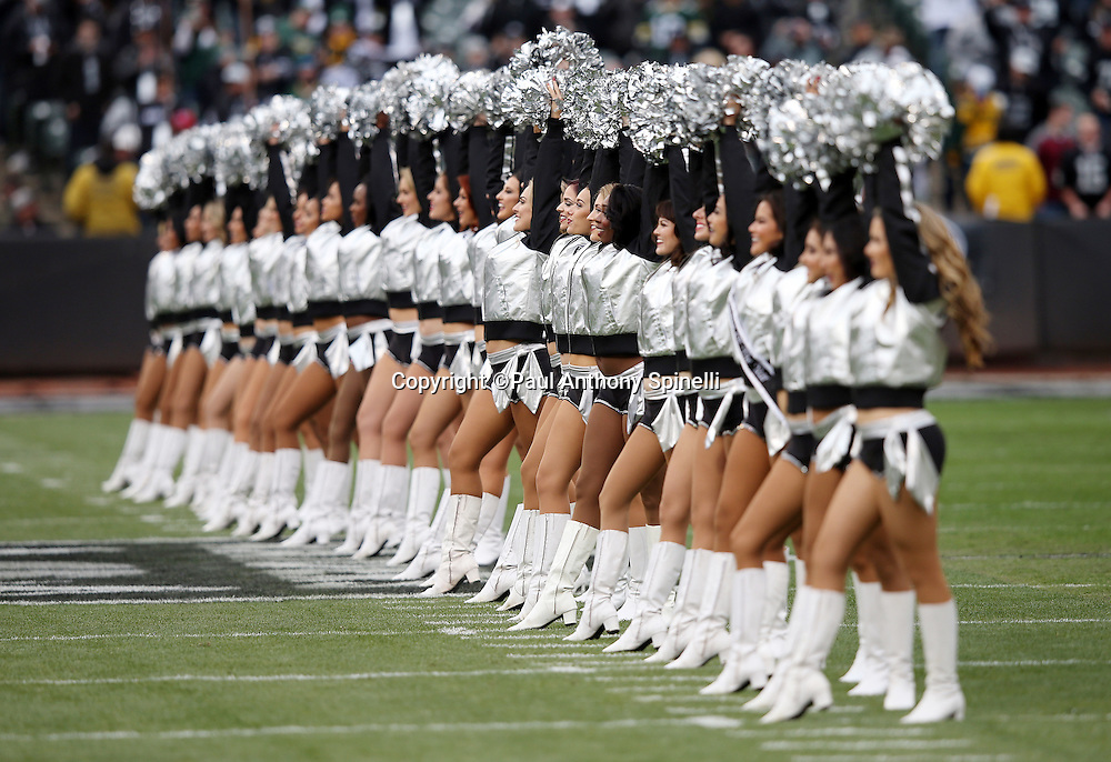 The Oakland Raiders cheerleaders stand in formation before the 2015 week 15 regular season NFL football game against the Green Bay Packers on Sunday, Dec. 20, 2015 in Oakland, Calif. The Packers won the game 30-20. (©Paul Anthony Spinelli)