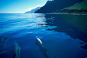 Dolphin, Napali Coast, Kauai, Hawaii, USA<br />