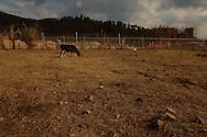 San Rafael las Flores, Santa Rosa, Guatemala vista de la propiedad de Clodoveo Rodriguez quien se niega a desocupar el terreno en el cual ha vivido todos sus 78 anos; su parcela se encuentra actualmente rodeada por las instalaciones de la operacion  Escobal S.A.. PHOTO: Graham Charles Hunt/IMAGENES LIBRES