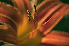 The Flora & Fauna
