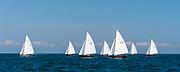Alerion Class sailing in the Opera House Cup regatta.