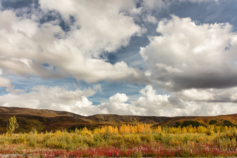 Autumn colors adorn the Alaska Range mountains near Paxson in Interior Alaska. Afternoon.
