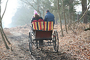 Pony and trap ride country lane woodland, Hollesley Common, Suffolk, England