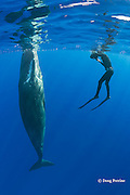 photographer Deron Verbeck and juvenile sperm whale, Physeter macrocephalus ( Endangered Species ), Kona, Hawaii Island ( the Big Island ), Hawaii, U.S.A.  ( Central Pacific Ocean ) MR 467
