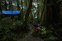 Rain forest at the 1200 m elevation Lower Camp, with prep tent on left, main camp tent in background, and Paul Oliver recording a frog call in the foreground.