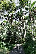 Foster Botanical Gardens, Honolulu, Oahu, Hawaii<br />