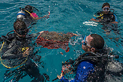 Divers hold a basket of coral to be placed in a new location during a coral relocation operation off of Curieuse, Seychelles on February 20, 2018. The coral relocation operation is an effort to reduce the effects of coral bleaching caused by the rise in sea temperatures which deeply affected shallow water reefs in parts of the Seychelles.<br /> <br /> The government of Seychelles has created 81,000 square miles of Marine Protected Areas as part of a conservation debt swap deal in an effort to shield marine ecosystems from unsustainable development and climate change while safeguarding its economy.