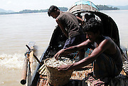 Fishermen is sort out their catching fish on the boat to sell near the bank of the Brhmaputra river of the eastern Indian state, Assam at Guwahati, but, excessive various types of Fishing and fishing-nets in River Brahmaputra have created problems to free movement and for food for River Dolphin. Pix-Shib Shankar Chatterjee