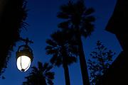 Palm trees and streetlamp. Sunset, above Carrer d'Elisabets, El Raval, Barcelona