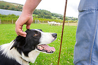 Sheepdog<br />