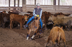 April 29 2017 - Minshall Farm Cutting 1, held at Minshall Farms, Hillsburgh Ontario. The event was put on by the Ontario Cutting Horse Association. Riding in the 35,000 Non-Pro Class is Don Vincent on Lil Hypnotic owned by the rider.