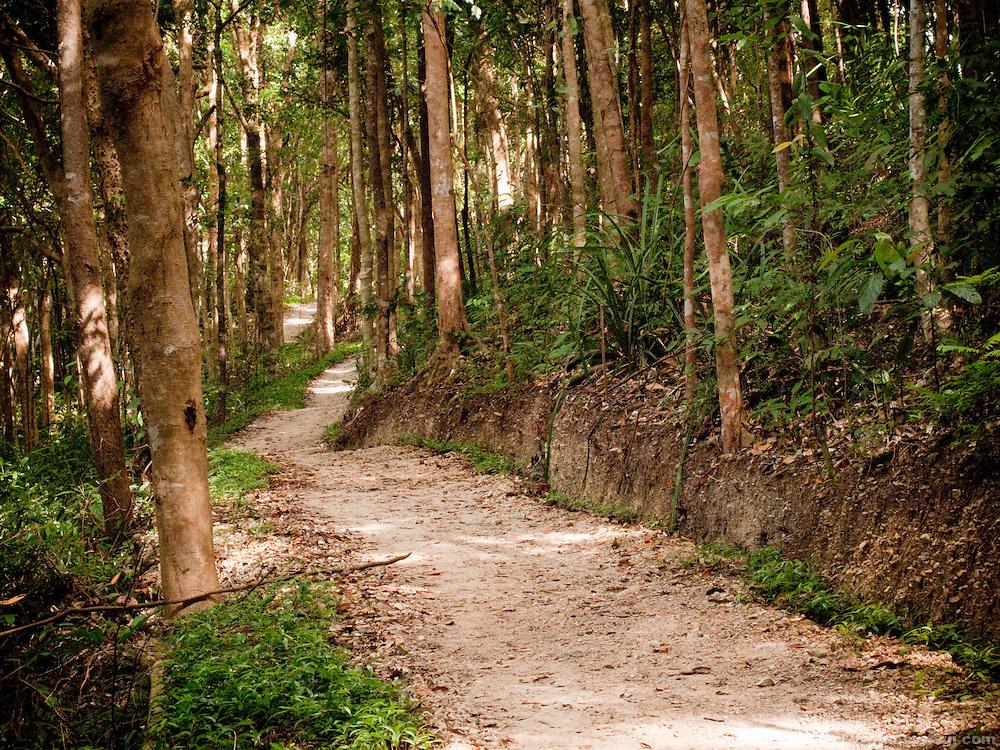 Trail through the forest in Tonsai, Thailand.